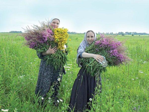 Белорусский сбор чая
