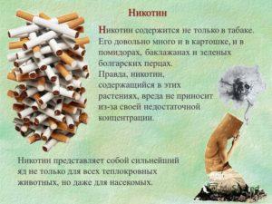 Nikotin v sostave sigaret
